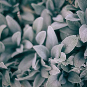 Santé immunitaire - Blogue - Marigil Pelletier naturopathe agréée